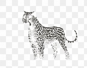 Leopard - Leopard Whiskers Tiger Cat Felidae PNG