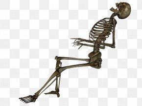 Skeleton Image - Human Skeleton Skull PNG