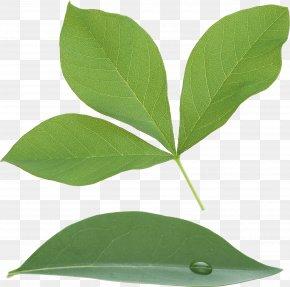 Green Leaf - 2017 Nissan LEAF PNG