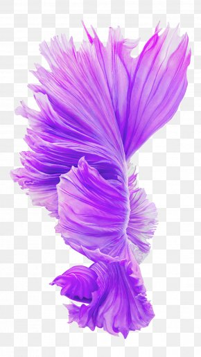 Purple Flowers Blooming - IPhone 6s Plus IPhone 6 Plus IPhone 4S IOS LTE PNG