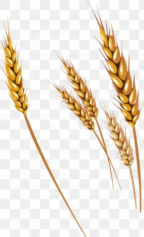 Wheat - Wheat Fruit Clip Art PNG