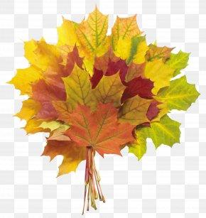 Autumn Leaves Image - Autumn Leaf Color Flower Bouquet PNG