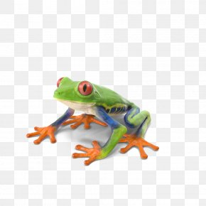 Red Eye Tree Frog - Red-eyed Tree Frog True Frog PNG