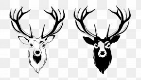 Deer Head Picture - Red Deer Antler Moose PNG