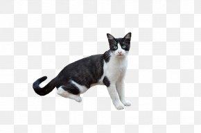 Kitten - Kitten American Wirehair Scratching Post Dog Cat Litter Trays PNG