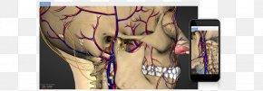 Human Body 3D - Human Body Arm Muscle Hip Homo Sapiens PNG