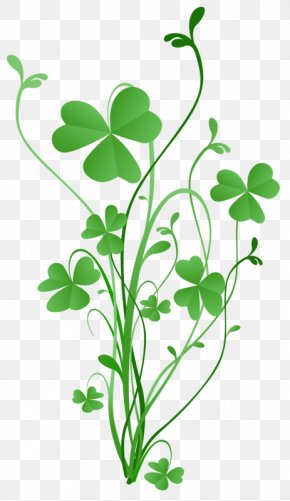 Saint Patrick's Day - Saint Patrick's Day Shamrock Four-leaf Clover Greeting & Note Cards PNG