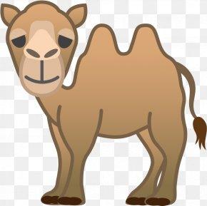 Livestock Bactrian Camel - Camel Camelid Arabian Camel Cartoon Brown PNG