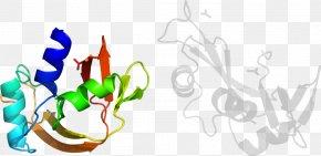 Leaf - Graphic Design Leaf Plant Stem Clip Art PNG