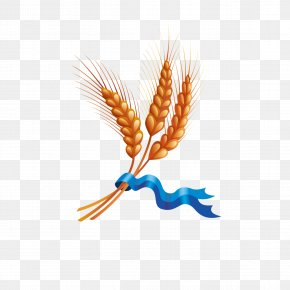 Wheat - Wheat Ear Harvest Cereal PNG