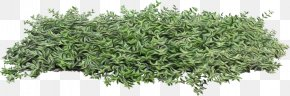 Flowering Plant Groundcover - Plant Grass Flower Tree Shrub PNG