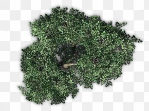 Tree Top View - Fruit Tree Plant PNG