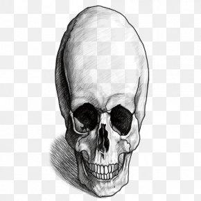 Nose - Nose Skeleton Homo Sapiens Skull Human Behavior PNG