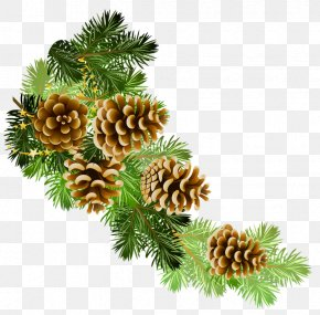 Transparent Pine Branch With Cones Clipart - Conifer Cone Scots Pine Branch Clip Art PNG