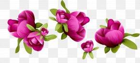 Impatiens Magnolia - Floral Spring Flowers PNG
