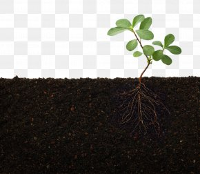 Green Plant Soil - Rhizosphere Nutrient Root Plant Stem PNG