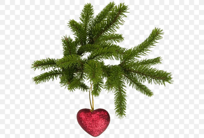 Christmas Tree Fir, PNG, 600x556px, Christmas Tree, Artificial Christmas Tree, Branch, Candle, Christmas Download Free