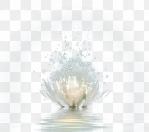FIG Beautiful Lotus Flower Water - Pattern PNG