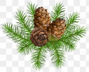 Pine Branch With Cones Clip Art Image - Pine Conifer Cone Clip Art PNG