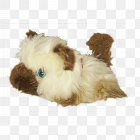 Puppy - Dog Breed Shih Tzu Lhasa Apso Puppy Companion Dog PNG