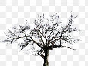 Trees - DeviantArt Beatport Drawing PNG