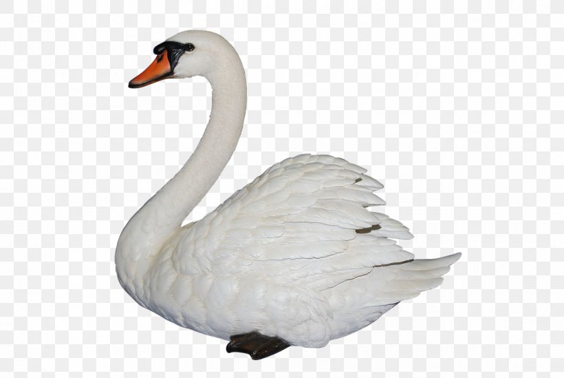 swan clipart images - Google Search | Banner drawing, Swans art, Vector free