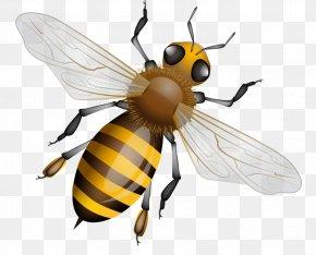 Bee - Western Honey Bee Vector Graphics Beehive Stock Photography PNG