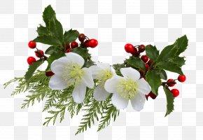 April - Cut Flowers Common Holly Clip Art PNG