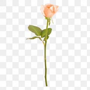 Rose - Rose Cut Flowers Floral Design Branch Plant Stem PNG