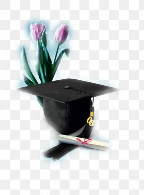 Hat - Graduation Ceremony Bachelor's Degree Hat Academic Degree Academic Certificate PNG