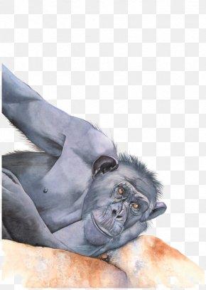 Hand-painted Monkey - Western Gorilla Common Chimpanzee Orangutan Ape Primate PNG