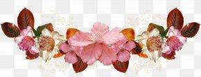 50 - Petal Floral Design Pink M Flowering Plant PNG