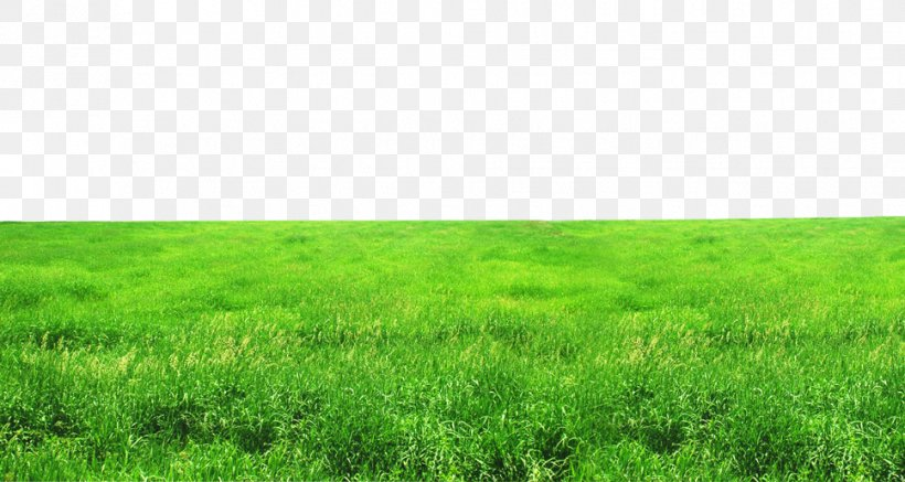 grassland ecosystem lawn grasses wallpaper png 968x517px grassland auglis computer ecosystem family download free grassland ecosystem lawn grasses