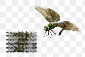 Dragon Fly - Insect Invertebrate Pest Pollinator Fauna PNG