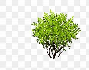 Bush - Shrub Tree PNG