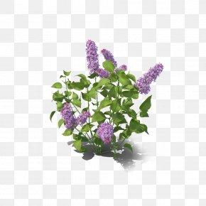 Lilac Decoration - Lilac Violet PNG