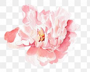 Pink Rose - Moutan Peony Floral Design Watercolor Painting PNG
