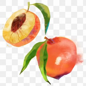 Hand-painted Peach - Saturn Peach Fruit Watercolor Painting PNG