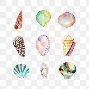 Shell - Watercolor Painting Seashell Drawing Beach Illustration PNG