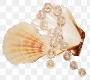 Pearl Shell - Seashell Pearl Mollusc Shell PNG
