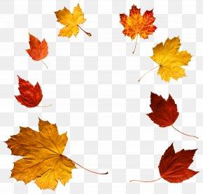 Autumn Leaves Clipart - Autumn Leaf Color Clip Art PNG