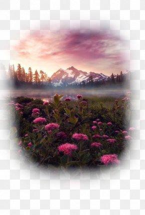 Park - Valley Of Flowers National Park Mount Shuksan Arches National Park Mount Rainier National Park Denali National Park And Preserve PNG