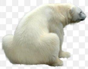 Polar White Bear - Polar Bear Polar Regions Of Earth Icon PNG