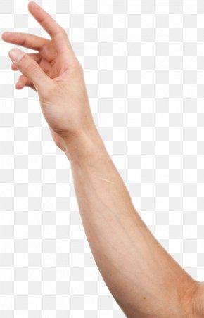 Hand - Hand Human Body Image Anatomy PNG