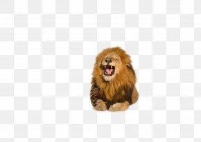 Download Free High Quality Lion Transparent Images - Lion Roar Clip Art PNG