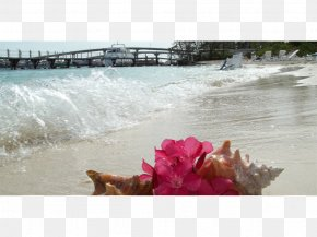 Paradise Island - Water Resources Stock Photography Vacation PNG