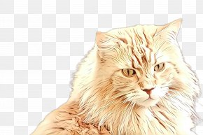 Domestic Longhaired Cat Norwegian Forest Cat - Cat Small To Medium-sized Cats Whiskers Fur European Shorthair PNG