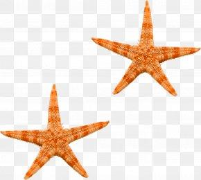 Starfish - Starfish Ocean Sea PNG