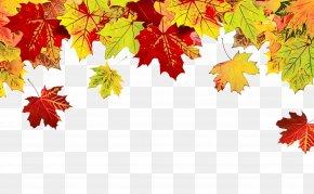 Deciduous Autumn - Maple Leaf PNG