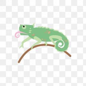 Chameleon - Frog Amphibian Reptile Chameleons Lizard PNG